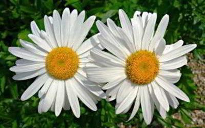 Сажаем осенью цветы, цветущие весной и летом