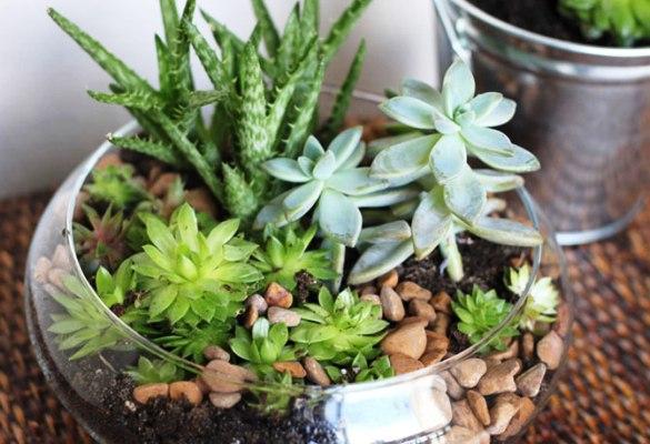 группа комнатных растений