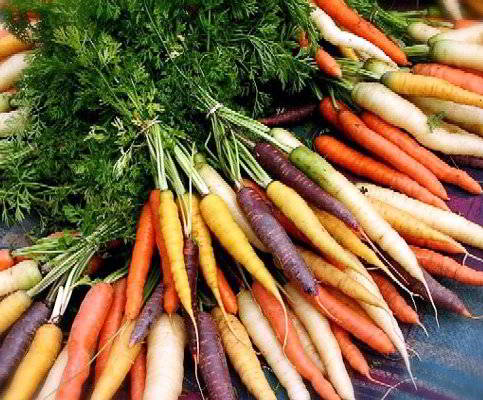 Морковь сорта и гибриды