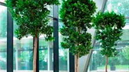 Офисный фитодизайн и оформление цветами бизнес-мероприятий
