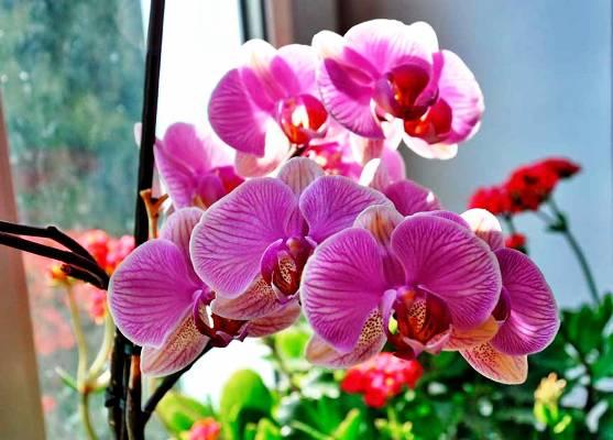 комнатная орхидея как ухаживать в домашних условиях после покупки
