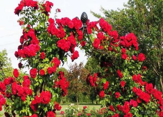 какие цветы сажают осенью семенами