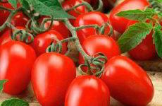 Самые лучшие сорта помидор для выращивания в теплице из поликарбоната