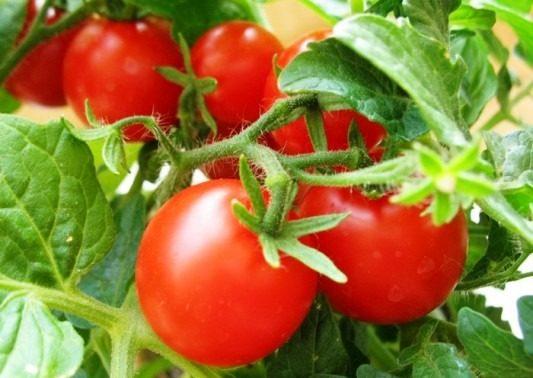 помидоры посадка на рассаду лунный календарь 2018