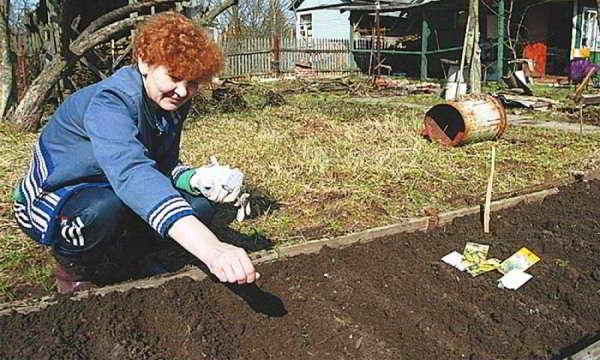циния выращивание из семян на рассаду