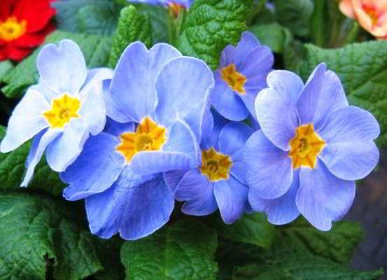какие цветы нужно сеять в марте на рассаду