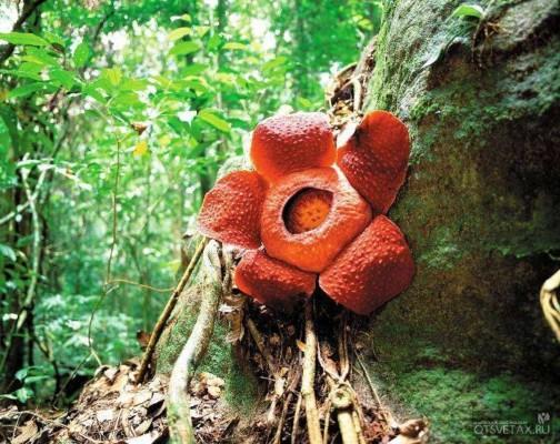 хищные растения на земле