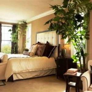 Растения для спальни: лучшие и опасные