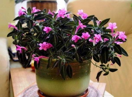 комнатные растения цветущие фото и названия каталог
