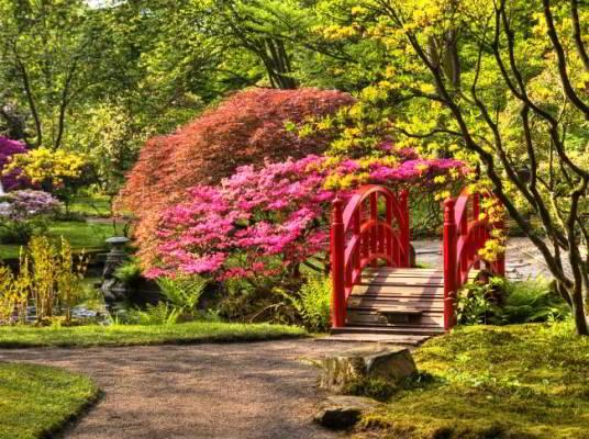 Спирея японская в ландшафтном дизайне