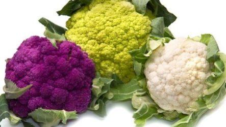Цветная капуста: выращивание в открытом грунте, правила ухода, сбор урожая