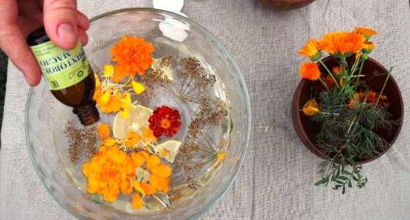 цветы бархатцы лечебные свойства