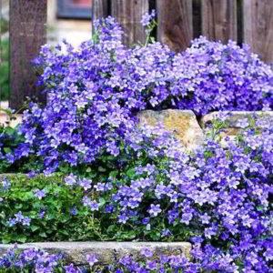 23 лучших многолетника: первоцветы, длительного цветения, морозостойкие, почвопокровные, цветущие всё лето, неприхотливые