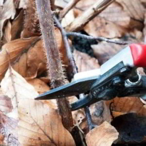 Правила ухода за малиной осенью и подготовка кустарника к зиме