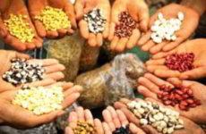 Разные виды растений, различные семена, что необходимо учитывать при их посеве?
