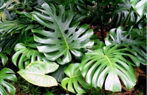 группы комнатных растений