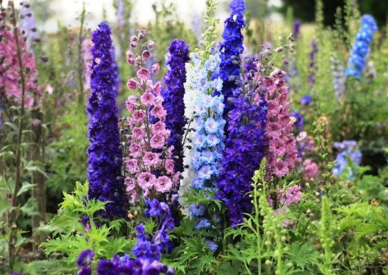 неприхотливые многолетние цветы