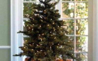 Домашняя ёлка в горшке на Новый год