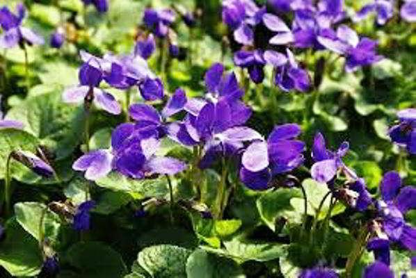 какие цветы сажать в марте на рассаду фото