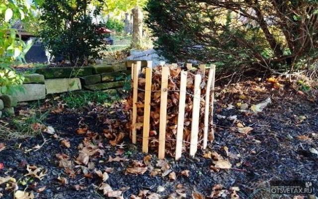 гортензия уход осенью подготовка к зиме посадка в горшки