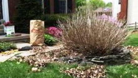 Уход за гортензией осенью и подготовка кустарника к зиме