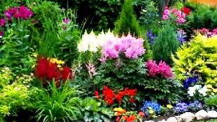 Групповые посадки садовых цветов и растений на даче фото