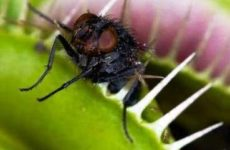 Растения хищники: виды, названия, фото