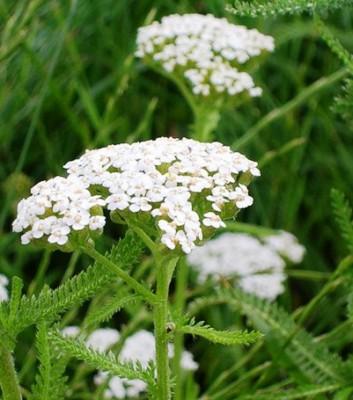 системные инсектициды для комнатных растений