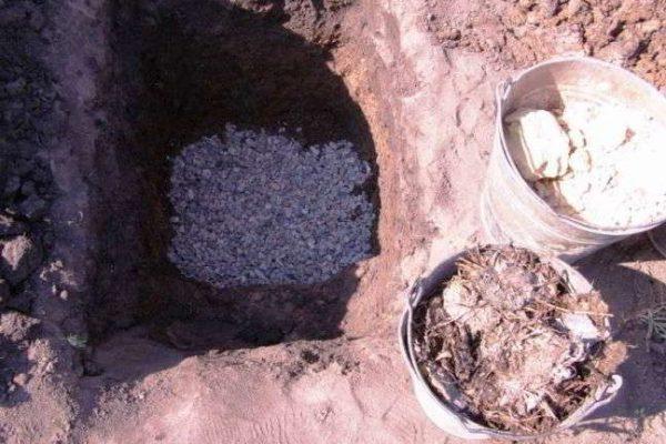 как посадить виноград осенью черенками в москве