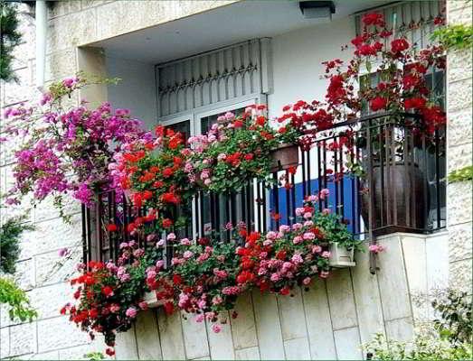 как озеленить балкон