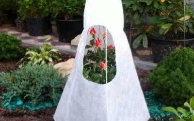 Розы: правильный уход осенью, подготовка и укрытие к зиме