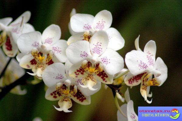 как выбрать орхидею при покупке