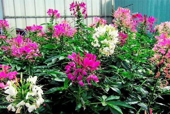 цветы посадка на рассаду в марте