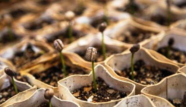 когда сеять баклажаны на рассаду в 2018 году по лунному календарю