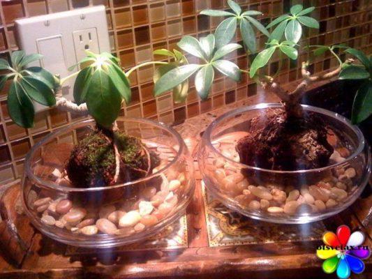 комнатные растения уменьшающие влажность воздуха