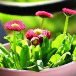 комнатные цветы цветущие фото и названия уход в домашних условиях