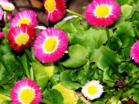 неприхотливые многолетники цветущие +все лето