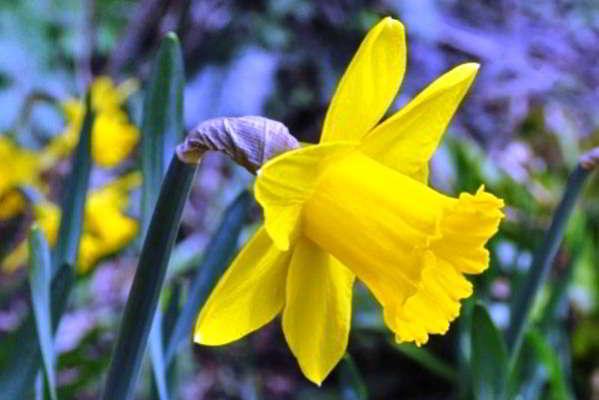 лучшие цветы для сада многолетники