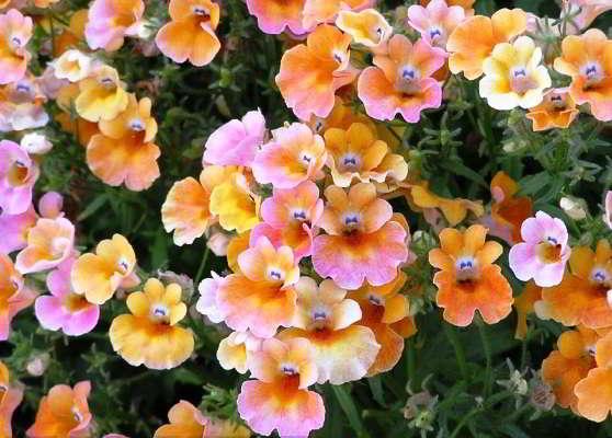 какие цветы можно сажать в марте
