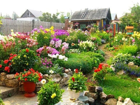 многолетние цветы неприхотливые фото