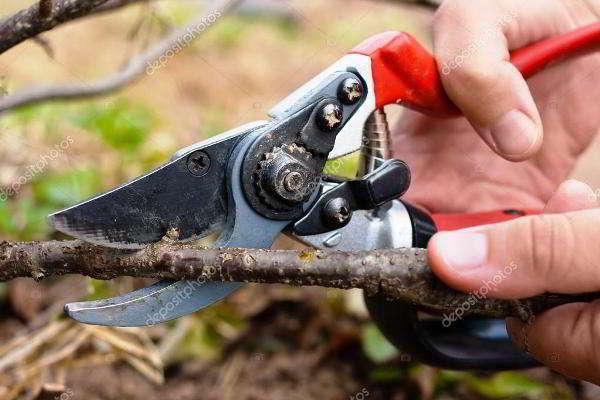 обрезка черной смородины осенью для начинающих