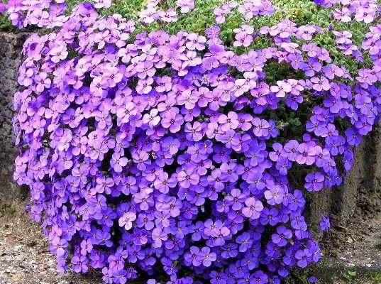 название многолетних цветов лучших
