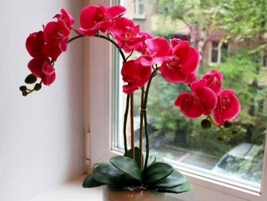 цветущая орхидея после покупки уход