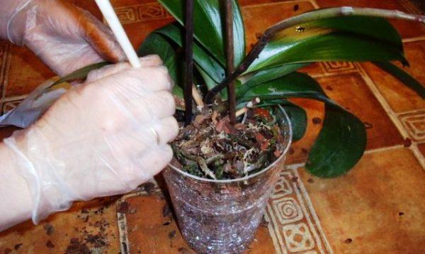 правила ухода за орхидеей после покупки