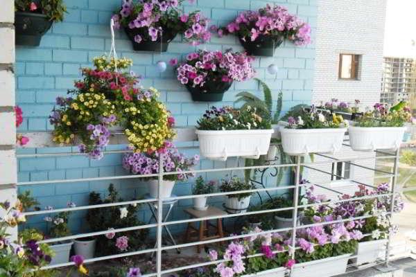 озеленение балкона фото