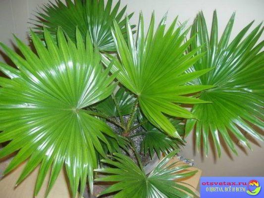 уход за домашними растениями осенью