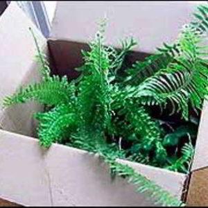 Транспортировка растений в зимнее время года