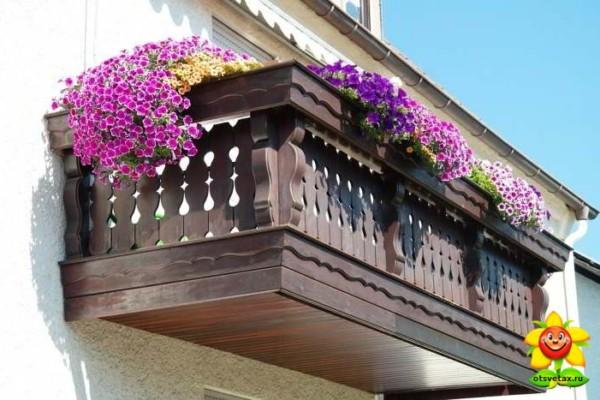 петуния уход и выращивание в домашних условиях прищипывание