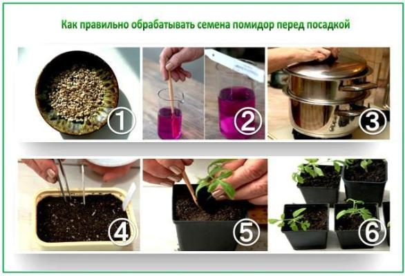 подготовка семян томатов к посеву