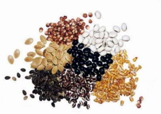 какие семена сажать в январе на рассаду